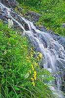 Wildflowers and waterfall, Prince William Sound, Alaska