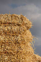 Square bale of barley straw<br /> &copy;Tim Scrivener Photographer 07850 303986<br />      ....Covering Agriculture In The UK....