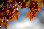 Fall Leaves. Photo by Nathan Latil/Ole Miss Communications
