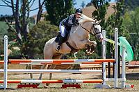 Class 33 Intro Horse 90cm. 2020 NZL-Fieldline Horse Floats Brookby Showjumping Summer GP Show. Papatoetoe Pony Club. Auckland. Sunday 9 February. Copyright Photo: Libby Law Photography