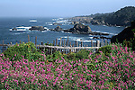 Sweetpeas growing along the coast of Mendocino County in Northern California