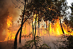 Forest Fires 2010-Incendios Forestales