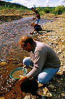 Prospectors panning for gold in a creek. Alaska.
