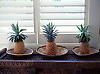 Pineapples placed in woven bowls as decorative interior feature.