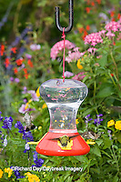 01162-12602<br /> Ruby-throated Hummingbirds (Archilochus colubris) at feeder near flower garden,  Marion Co.  IL