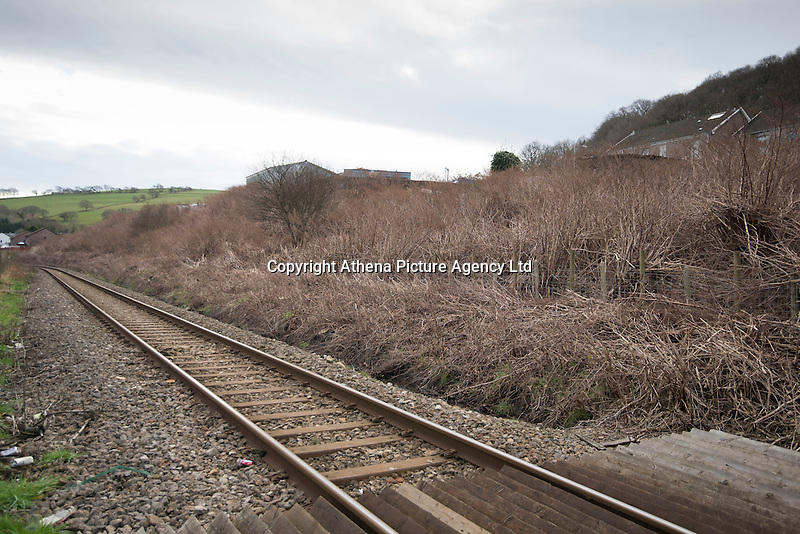 "COPY BY TOM BEDFORD<br /> Pictured: The Japanese knotweed which is dried because of the season behind the properties.<br /> Re: A homeowner whose bungalow is towered over by Japanese knotweed on a railway line has won a four-year legal fight for compensation by Network Rail.<br /> Robin Waistell claimed he was unable to sell because the rail body had ignored requests to tackle the invasive weed on the bank behind his home in Maesteg.<br /> The case was seen as a likely test for homeowners whose property is blighted by knotweed on railway embankments.<br /> Network Rail said it would be ""reviewing the judgement in detail"".<br /> It is understood the rail infrastructure body was refused immediate leave to appeal against the ruling.<br /> Network Rail faces potential legal costs running into six figures after losing the case in Cardiff bought by Mr Waistell and a neighbour.<br /> Widower Mr Waistell, 70, had moved to the bungalow from Spain after his wife died.<br /> He had hoped to return to the sun, but found his property sale stymied by the knotweed growing on adjacent Network Rail land and was asking for £60,000 compensation for loss of value."