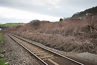 COPY BY TOM BEDFORD<br /> Pictured: The Japanese knotweed which is dried because of the season behind the properties.<br /> Re: A homeowner whose bungalow is towered over by Japanese knotweed on a railway line has won a four-year legal fight for compensation by Network Rail.<br /> Robin Waistell claimed he was unable to sell because the rail body had ignored requests to tackle the invasive weed on the bank behind his home in Maesteg.<br /> The case was seen as a likely test for homeowners whose property is blighted by knotweed on railway embankments.<br /> Network Rail said it would be &quot;reviewing the judgement in detail&quot;.<br /> It is understood the rail infrastructure body was refused immediate leave to appeal against the ruling.<br /> Network Rail faces potential legal costs running into six figures after losing the case in Cardiff bought by Mr Waistell and a neighbour.<br /> Widower Mr Waistell, 70, had moved to the bungalow from Spain after his wife died.<br /> He had hoped to return to the sun, but found his property sale stymied by the knotweed growing on adjacent Network Rail land and was asking for &pound;60,000 compensation for loss of value.