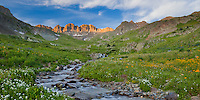 San Juan Mountains, CO<br /> American Basin with red blooming king's crown (Rhodiola integrifolia), bistort (Polygonum bistortoides) and bittercress (Cardamine cordifolia) alongside Grizzly Creek under Handies Peak