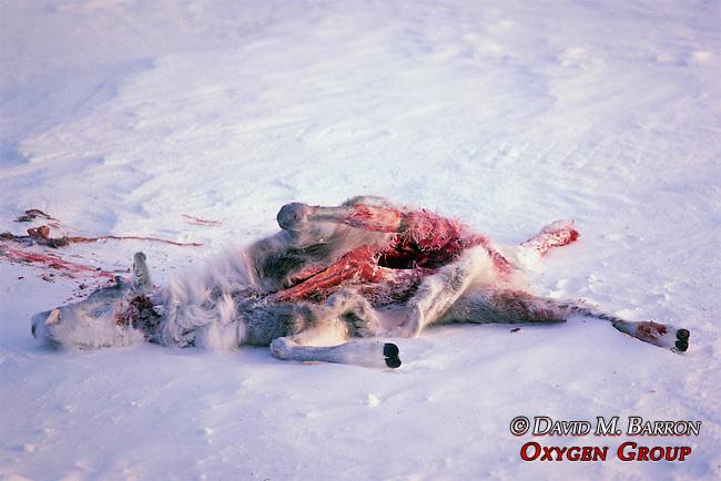 Dead Caribou