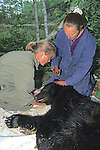 Gitte Andersen & Kris Timmerman Working On Black Bear