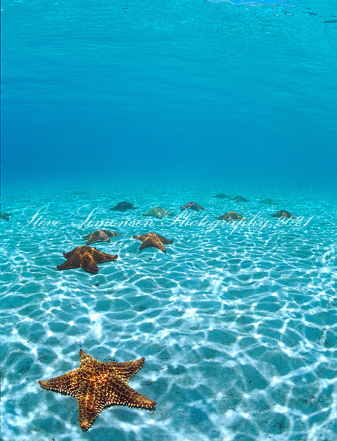 New Stars.St John, Virgin Islands