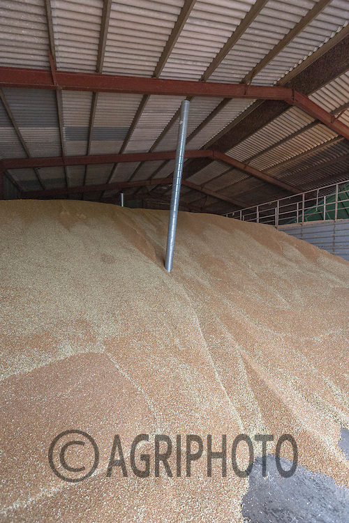 Wheat in a flat floor grain store<br /> Picture Tim Scrivener 07850 303986