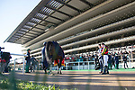 FUCHU,JAPAN-FEBRUARY 17: Fame Game,ridden by Christophe Lemaire, after winning the Diamond Stakes at Tokyo Racecourse on February 17,2018 in Fuchu,Tokyo,Japan (Photo by Kaz Ishida/Eclipse Sportswire/Getty Images)