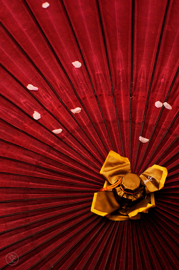 Gold, red, and pink: a traditional Japanese kasa umbrella with fallen cherry petals.
