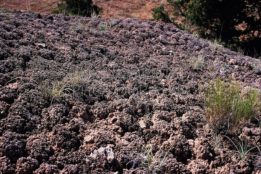 GEOLOGY: Cryptobiotic soil, Kodachrome State Park, Utah<br /> These crusts are a living community of many types of fungi, moss and lichen. Cyanobacteria, the most important component, produce filaments that hold moisture, prevent erosion, and help other plants grow.