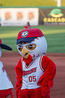 Hootz the Orem Owls mascots during the game against the Ogden Raptors in Pioneer League action at Home of the Owlz on June 20, 2015 in Provo, Utah.  (Stephen Smith/Four Seam Images)
