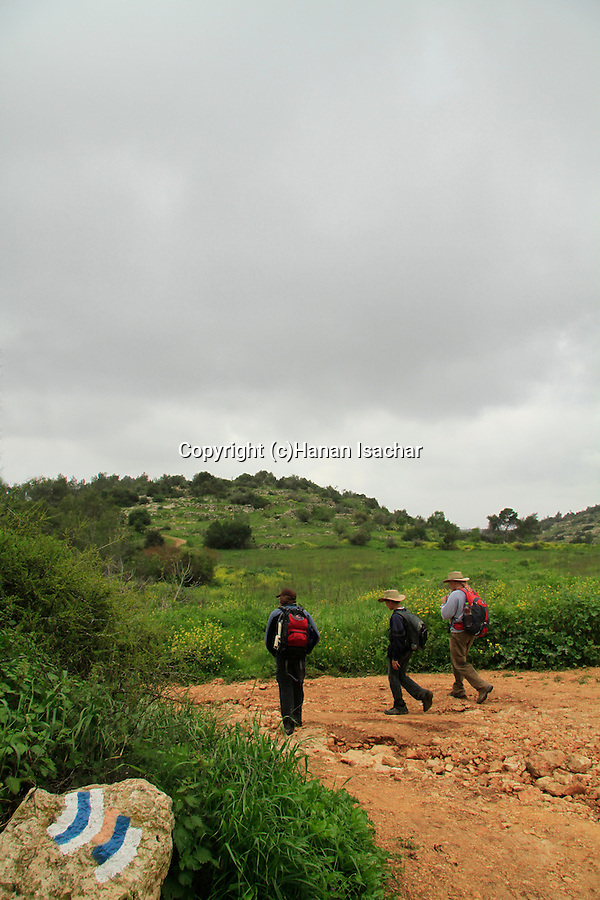Israel, Jerusalem mountains, hiking the Israel Trail in Martyrs forest