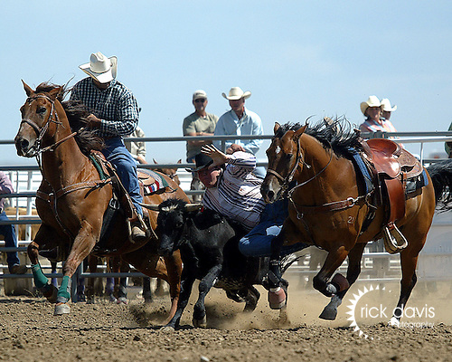 Craig Roe drops down on his steer during steer wrestling action at the Southeast Weld County CPRA Rodeo on August 12, 2006 in Keenesburg, Colorado.