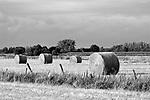 Europa, DEU, Deutschland, Nordrhein Westfalen, NRW, Rheinland, Niederrhein, Rees-Milingen, Naturschutzgebiet Hetter-Millinger Bruch, Wiesenlandschaft, Gruenland, Nach der Heuernte, Heuballen, Sommer, Kategorien und Themen, Natur, Umwelt, Landschaft, Jahreszeiten, Stimmungen, Landschaftsfotografie, Landschaften, Landschaftsphoto, Landschaftsphotographie, Naturschutz, Naturschutzgebiete, Landschaftsschutz, Biotop, Biotope, Landschaftsschutzgebiete, Landschaftsschutzgebiet, Oekologie, Oekologisch, Typisch, Landschaftstypisch, Landschaftspflege<br /> <br /> [Fuer die Nutzung gelten die jeweils gueltigen Allgemeinen Liefer-und Geschaeftsbedingungen. Nutzung nur gegen Verwendungsmeldung und Nachweis. Download der AGB unter http://www.image-box.com oder werden auf Anfrage zugesendet. Freigabe ist vorher erforderlich. Jede Nutzung des Fotos ist honorarpflichtig gemaess derzeit gueltiger MFM Liste - Kontakt, Uwe Schmid-Fotografie, Duisburg, Tel. (+49).2065.677997, <br /> archiv@image-box.com, www.image-box.com]