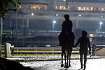 November 1, 2018: A horse walks back to the barn at Churchill Downs on November 1, 2018 in Louisville, Kentucky. Jamey Price/Eclipse Sportswire/CSM