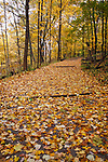 A Quiet Walking Path Through The Woods In Autumn, Sharon Woods, Southwestern Ohio, USA