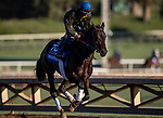 OCT 28: BBreeders' Cup Juvenile  entrant Maxfield, trained by Brendan P. Walsh, gallops at Santa Anita Park in Arcadia, California on Oct 28, 2019. Evers/Eclipse Sportswire/Breeders' Cup