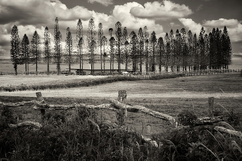 Fence, pasture and Cook Pines with barn, Stables at Ko'ele. Lanai, Hawaii