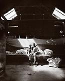 NEW ZEALAND, portrait of a farmer sitting in a barn with sheep dog (B&W)