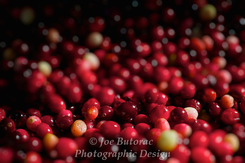 Fresh Cranberries harvested in the local Fort Langley area, Fort Langley Cranberry Festival, Fort Langley B.C.