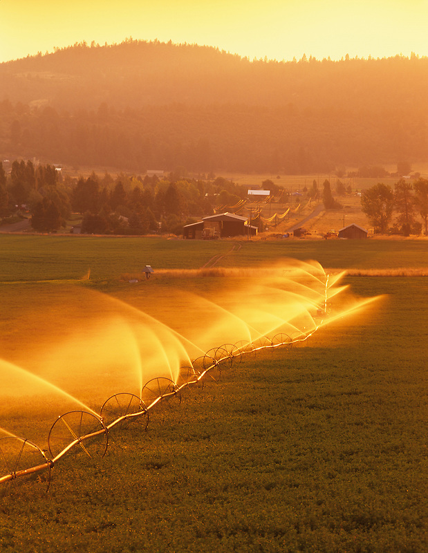Backlit irrigation in alfalfa field. Near Klamath Falls, Oregon