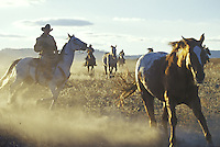Cowboys wrangling horses. Ponderosa Ranch, Seneca, OR.