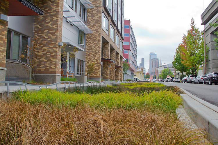 Seattle, South Lake Union, new apartments, Cascade Neighborhood, rain gardens, adjacent to the Amazon Campus, Washington State,