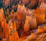 Hoodoos at Sunrise, Bryce Canyon National Park, Utah