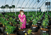 Charlotte Figi (cq, age 7) standing in the marijuana farm that grows Charlotte's Web grown by the Stanley Brothers in Colorado Springs, Colorado, Thursday, February 6, 2013. Charlotte suffered from over 100 seizure like symptoms and epilepsy before discovering a strain of marijuana that would stop her seizures. <br /> <br /> Photo by Matt Nager