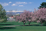 Colorful blooms fill spring-time trees in City Park, Denver, CO