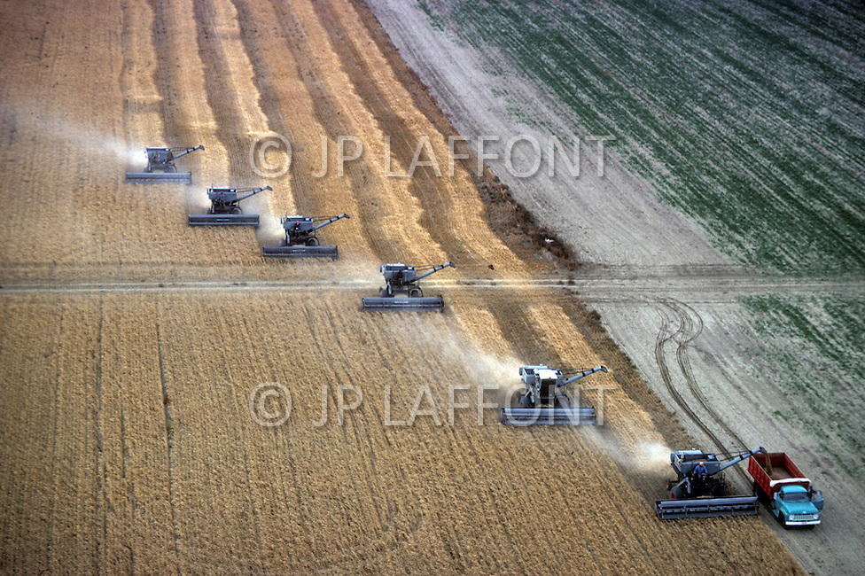Montana, USA, September, 1978. Agriculture - wheat harvest near Chester area. Using multiple combines maximizes production.
