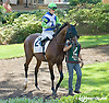 Other Cheek before The Kent Stakes (gr 3) at Delaware Park on 9/20/14