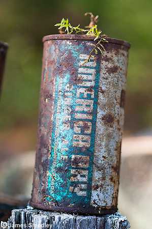 Rusted cans in wilderness