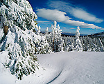 Fresh fallen snow at Mammoth Lakes in the Eastern Sierra Nevada, California