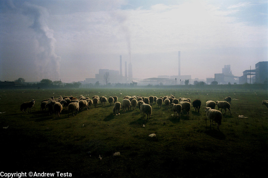 KOSOVO. Obilic. 27/10/2000..Sheep grazing in front of Obilic Power Station, near Pristina..©Andrew Testa