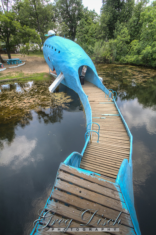 The Blue Whale of Catoosa is a waterfront structure, located just east of the town of Catoosa, Oklahoma, and it has become one of the most recognizable attractions on old Route 66.<br /> Hugh Davis built the Blue Whale in the early 1970s as a surprise anniversary gift to his wife Zelta, who collected whale figurines.[1] The Blue Whale and its pond became a favorite swimming hole for both locals and travelers along Route 66 alike.<br /> <br /> Originally, the pond surrounding the massive Blue Whale was spring fed and intended only for family use. However, as many locals began to come to enjoy its cool waters, Davis brought in tons of sand, built picnic tables, hired life guards, and opened his masterpiece to the public