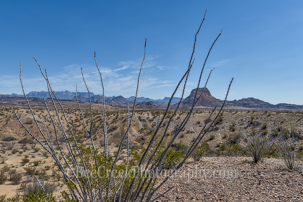 We like the distant view of the park seen through the Octillos with the Cerro Castellian mountain and the Chisis in the distance in this desert landscape in Big bend national park.