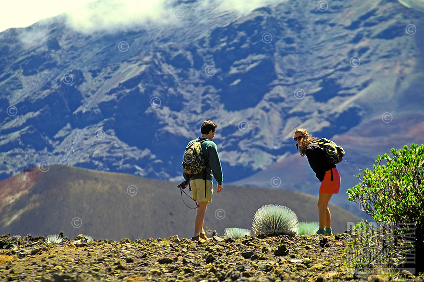 Couple hiking in Haleakala observe silversword plant in crater