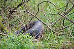 seen in the Esopus Bend Nature Preserve, in Saugerties, NY, on Saturday, September 2, 2017. Photo by Jim Peppler. Copyright/Jim Peppler-2017.