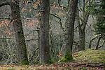Europa, DEU, Deutschland, Nordrhein Westfalen, NRW, Eifel, Hirschrott, Nationalpark Eifel, Wald, Waldgebiet.  Kategorien und Themen, Natur, Umwelt, Landschaft, Jahreszeiten, Stimmungen, Landschaftsfotografie, Landschaften, Landschaftsphoto, Landschaftsphotographie, Tourismus, Touristik, Touristisch, Touristisches, Urlaub, Reisen, Reisen, Ferien, Urlaubsreise, Freizeit, Reise, Reiseziele, Ferienziele<br /> <br /> [Fuer die Nutzung gelten die jeweils gueltigen Allgemeinen Liefer-und Geschaeftsbedingungen. Nutzung nur gegen Verwendungsmeldung und Nachweis. Download der AGB unter http://www.image-box.com oder werden auf Anfrage zugesendet. Freigabe ist vorher erforderlich. Jede Nutzung des Fotos ist honorarpflichtig gemaess derzeit gueltiger MFM Liste - Kontakt, Uwe Schmid-Fotografie, Duisburg, Tel. (+49).2065.677997, archiv@image-box.com, www.image-box.com]