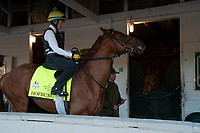 LOUISVILLE, KY - MAY 1: Hofburg, trained by Bill Mott, at Churchill Downs on May 1, 2018 in Louisville, Kentucky. (Photo by Eric Patterson/Eclipse Sportswire/Getty Images)