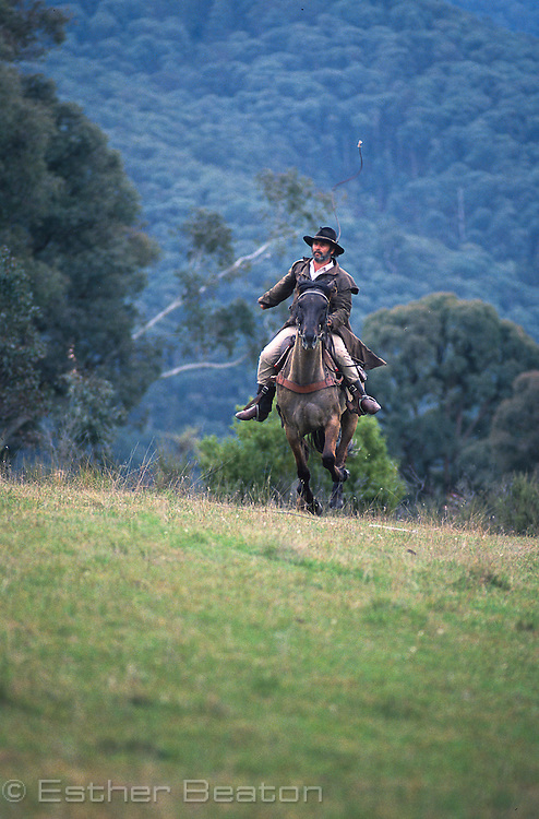 "Mountain Cattleman or stockman of the ""High Country"" on galloping horse with whip. Snowy Mountain, Victoria"