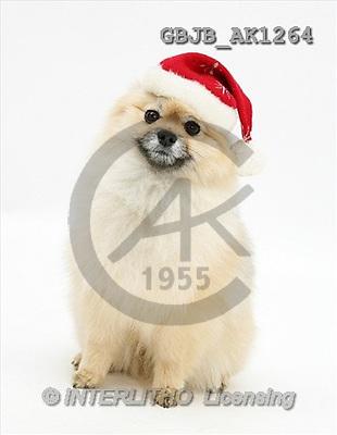 Kim, CHRISTMAS ANIMALS, photos(GBJBAK1264,#XA#) stickers