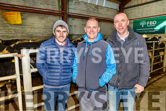 John Hanafin (Spa), Tony McElligott (Tralee) and Joe Clifford (Churchill) at the Fat Stock sale in the Tralee Mart on Monday