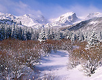 snow, Hallett Peak, Glacier Creek, willows, Rocky Mountain National Park, Colorado